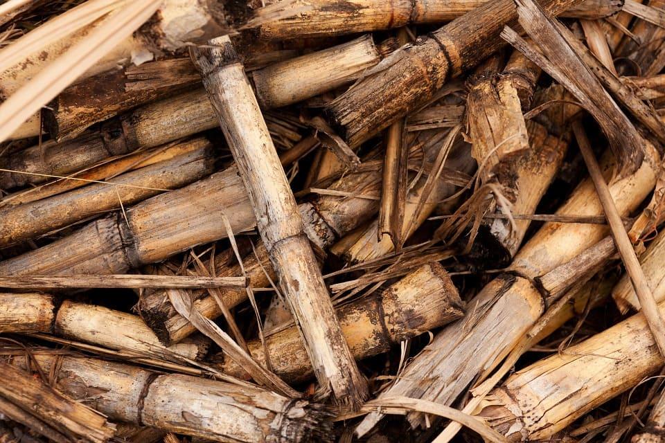 Energias Renováveis - Biomassa