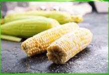 milho na usina safra produz etanol